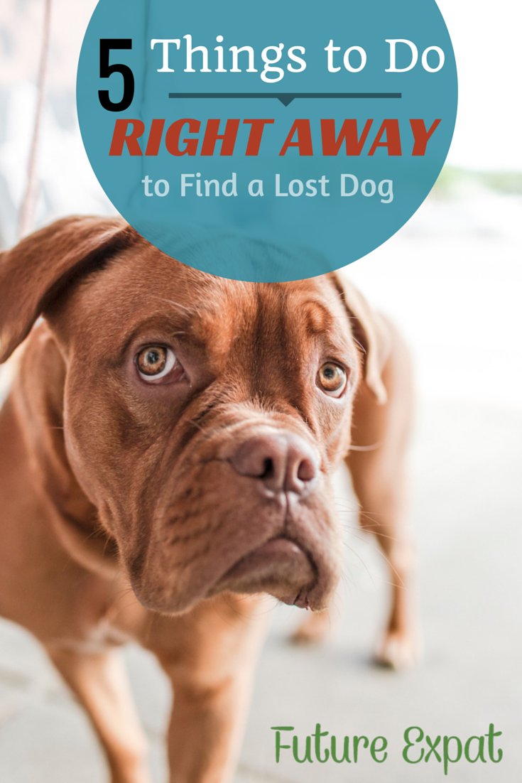5 Things To Do Right Away to Find a Lost Dog - Future Expat