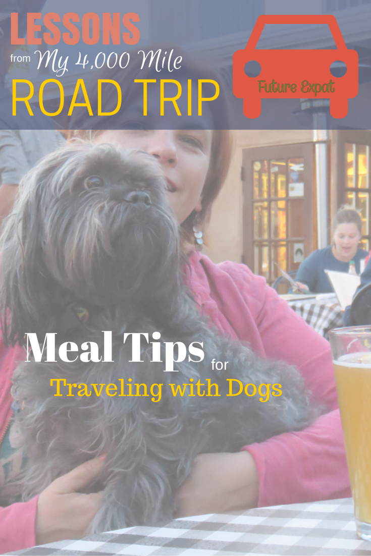 Lessons from My 4000 Mile Road Trip: Meal Tips for Traveling with Dogs