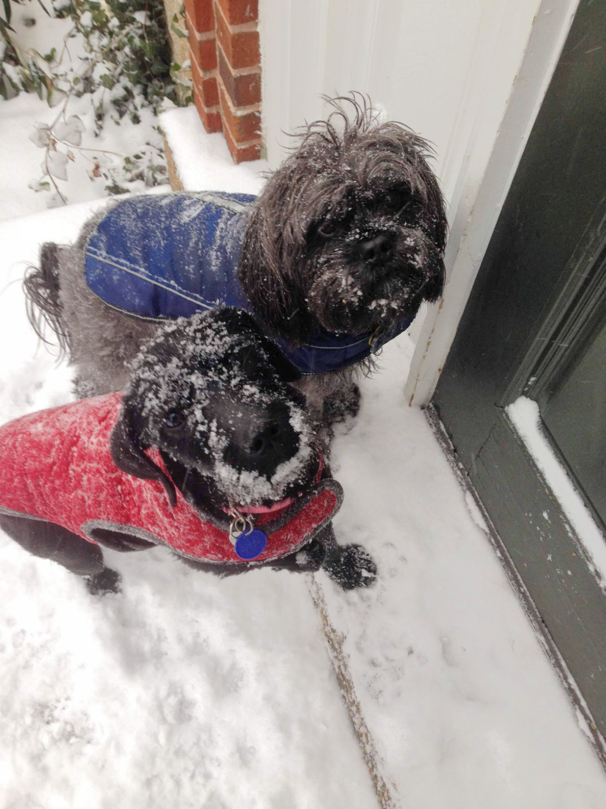 Milo's Closet: Keeping Your Dog Warm in Cold Weather