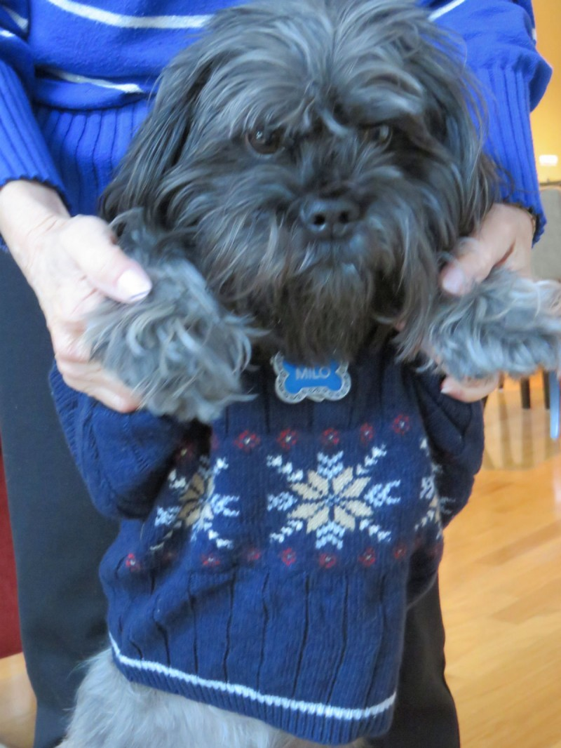 Milo's Closet: Keeping Your Dog Warm in Cold Weather | Future Expat