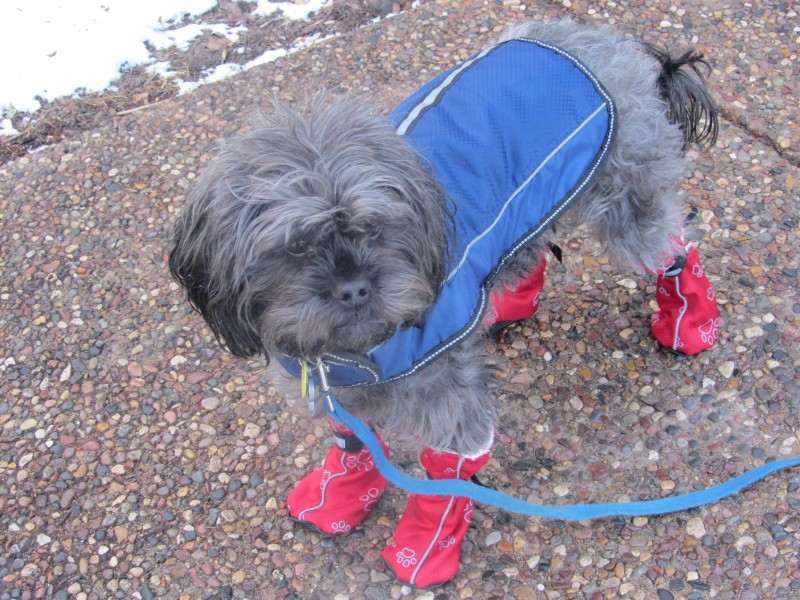 Milo raincoat and boots