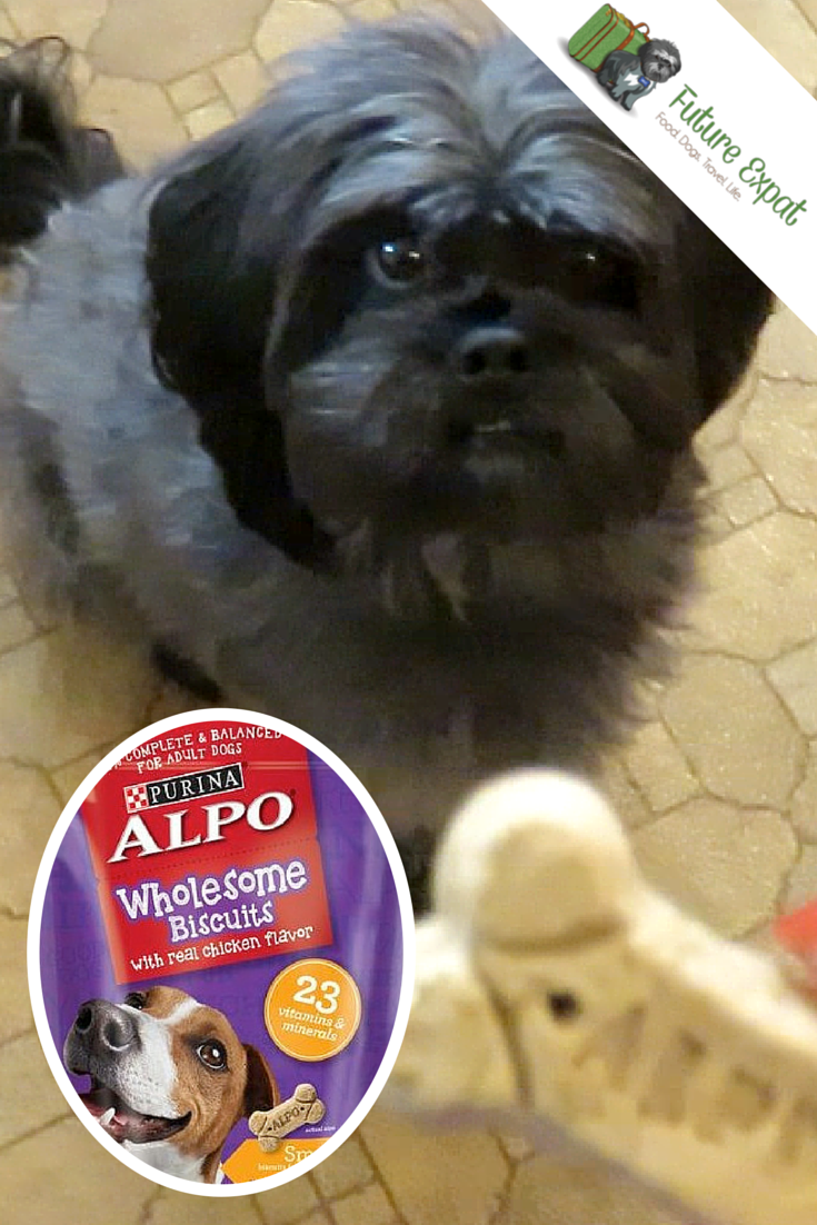 Milo Settles into Our New Home with  Alpo Wholesome Dog Biscuit Review - Future Expat