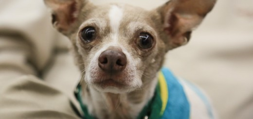 9 Small Dogs Looking for Forever Homes from Senior Dogs 4 Seniors | Future Expat