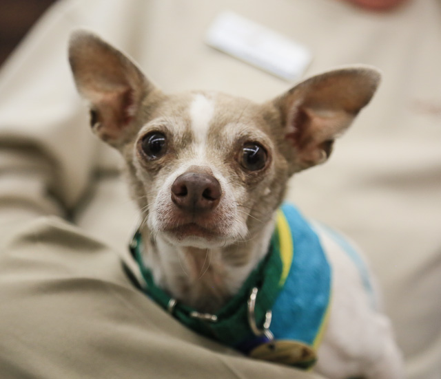9 Small Dogs Looking for Forever Homes