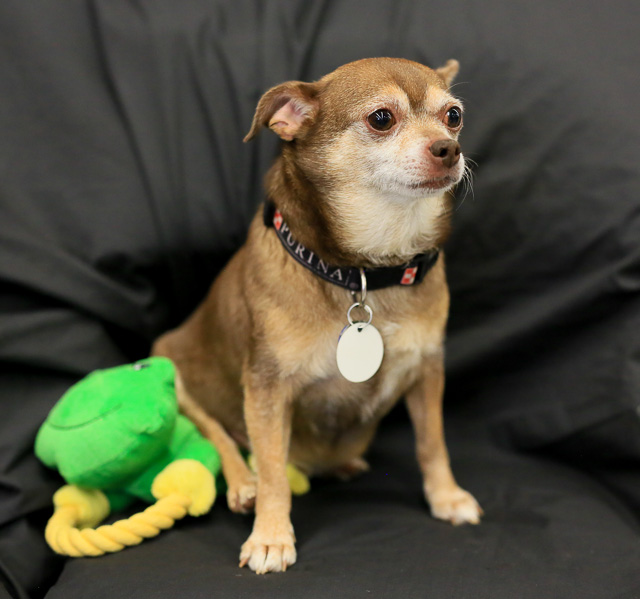 12 Small Dogs Looking for Forever Homes  from Senior Dogs 4 Seniors | Future Expat