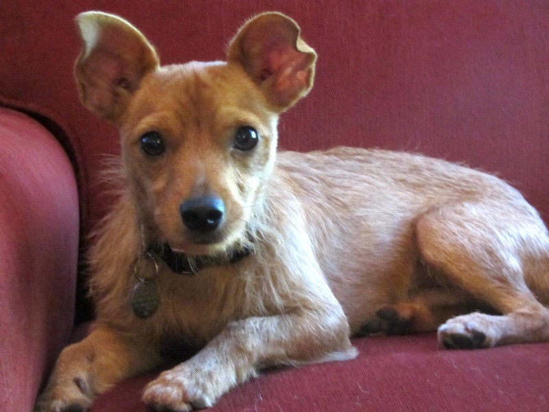 National Dog Day - Foster Dogs | Future Expat