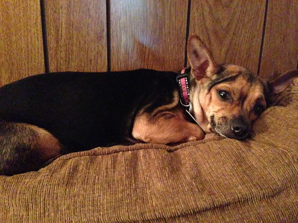 Fostering Rescue Dogs: Karen's Foster Dogs
